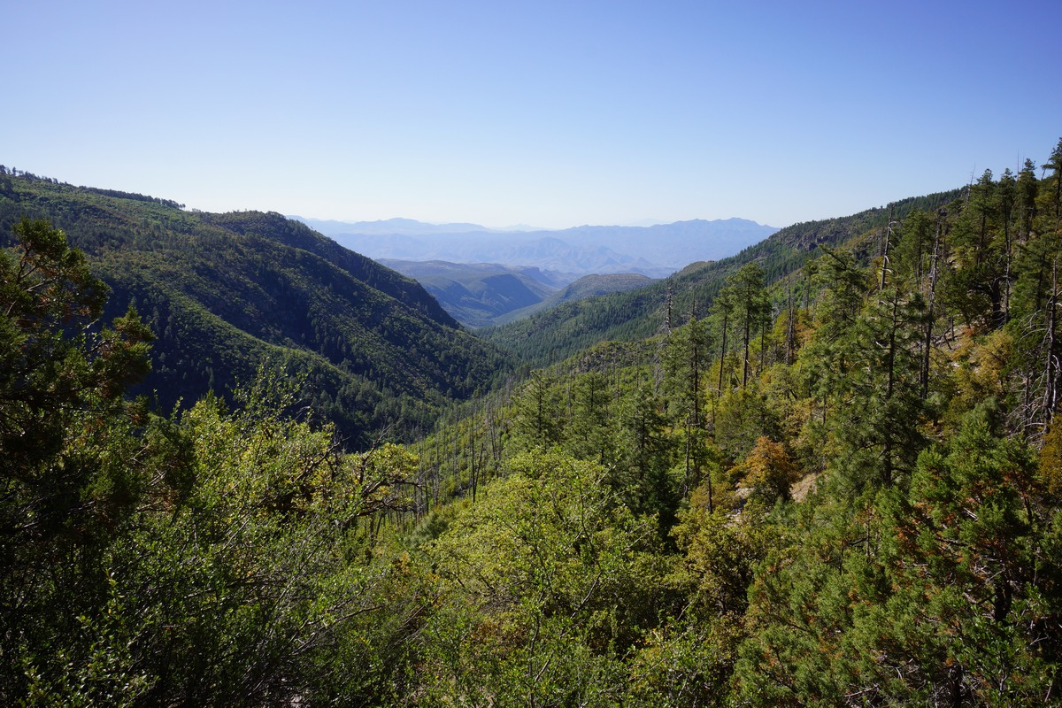 A view of coon creek canyon from trail 160