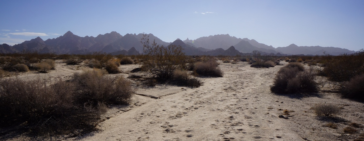 distant view of the coxcomb mountains in joshuia tree national park