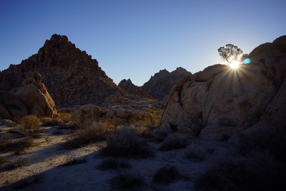 sun shines behind tree on rock in desert