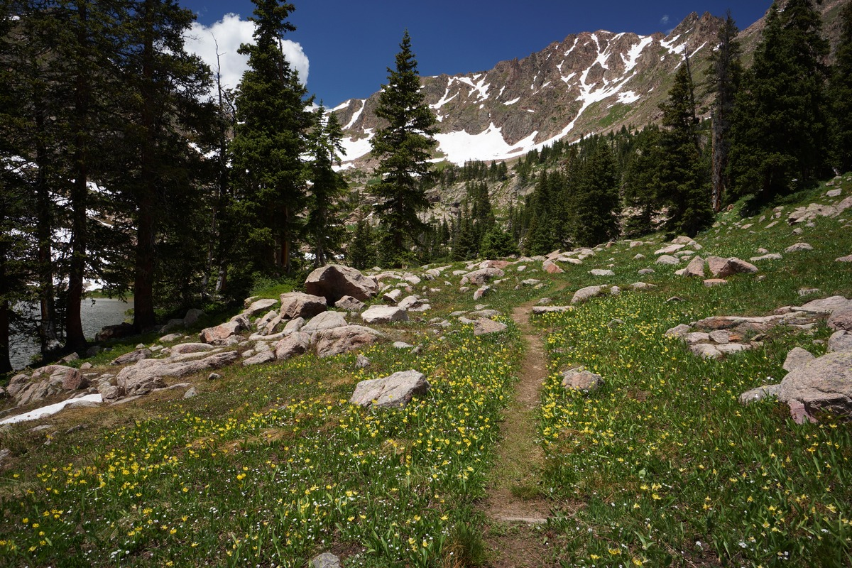 yellow wildflowers line the trail on the north side of gore lake
