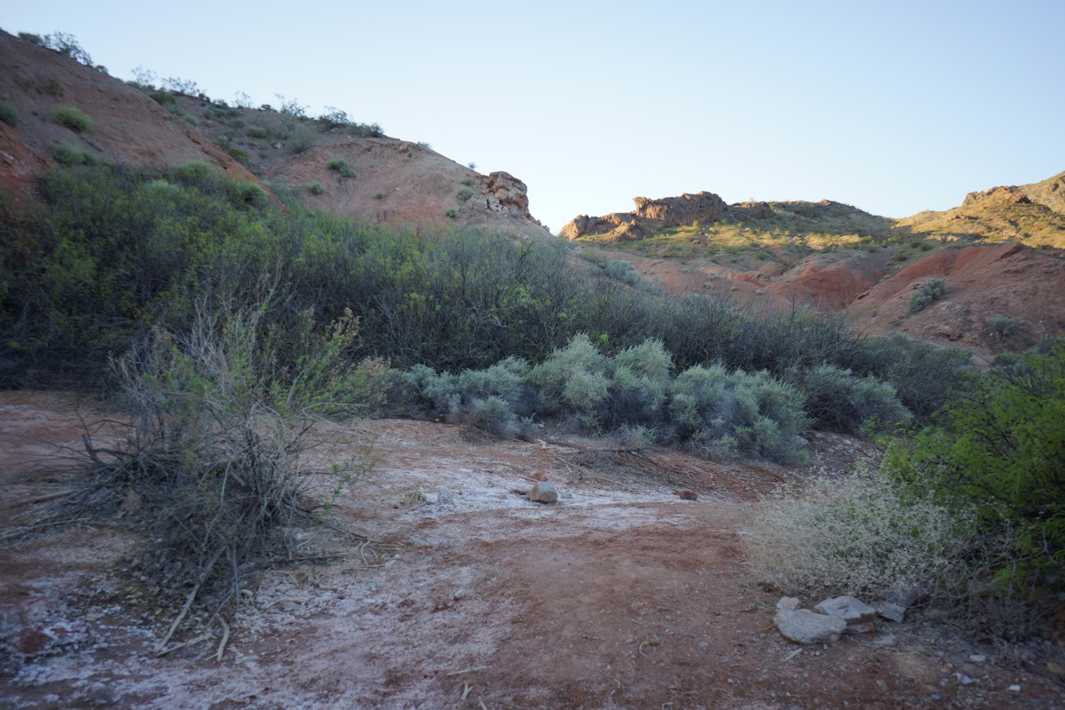 dense green shrubbery at cottonwood spring