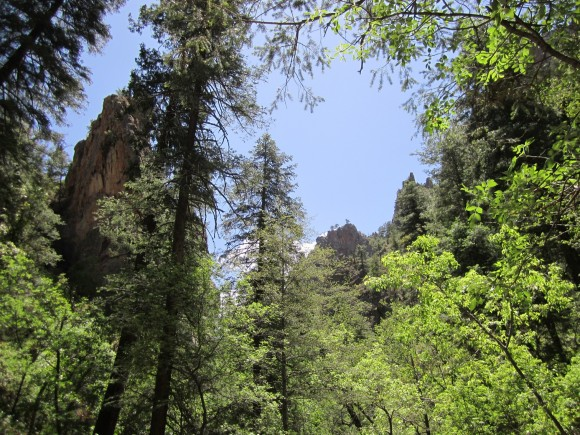 looking up from south fork trail