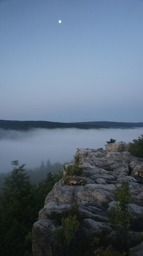 dolly sods wilderness pre dawn moon