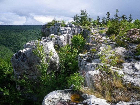 Breathed Mountain View dolly sods