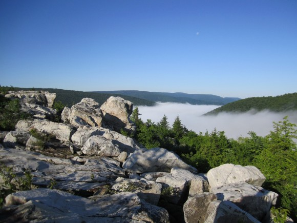 Morning fog in the Dolly Sods Wilderness