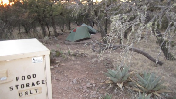 outer mountain loop campsites in the chisos mountains