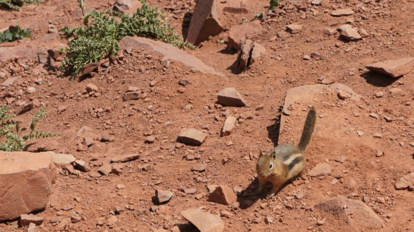 chipmunk on mountain pass