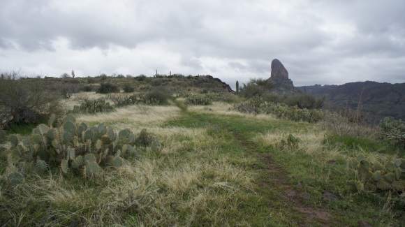 trail on blacktop mesa winding towards weaver's needle