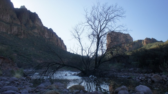 tree in labarge creek