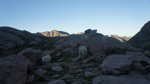 twin lakes mountain goats chicago basin