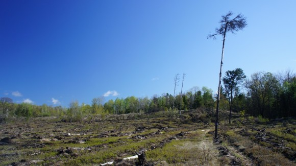 hcp logging area north of clear lake