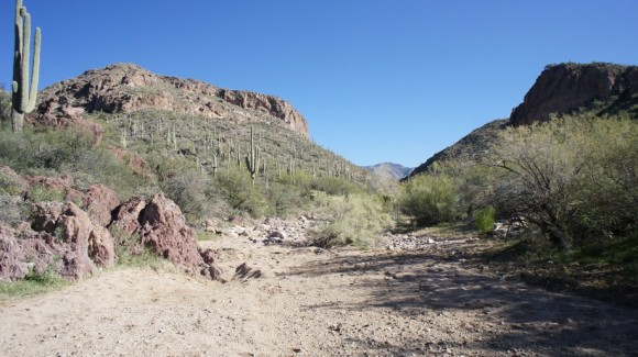 hiking through randolph canyon on the coffee flat trail