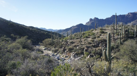 randolph canyon junction with jf trail