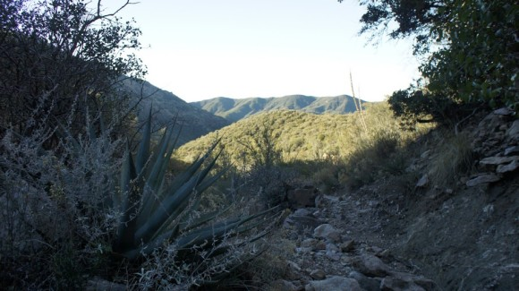 on the reavis ranch trail