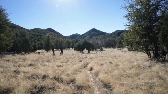 large open grassy field near reavis ranch