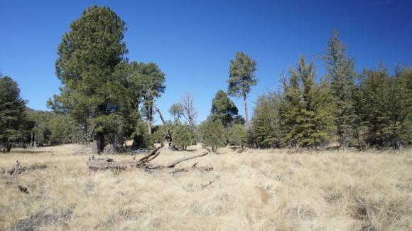 reavis ranch grassy field
