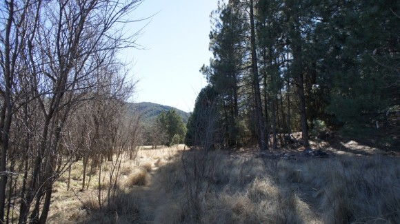 hiking on the reavis ranch trail