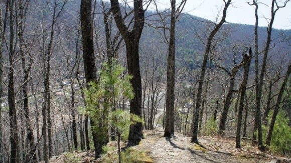 a view of pine creek and slate run from the black forest trail