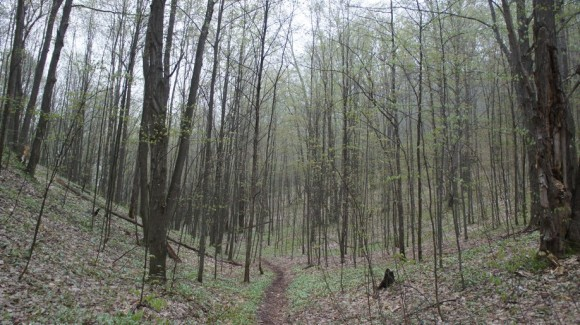 hiking through the mackinaw state forest on the jordan river pathway