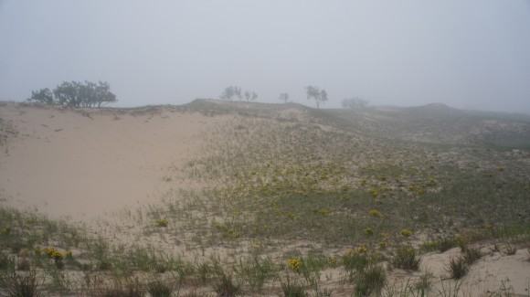 Foggy Nordhouse Dunes