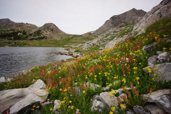wildflowers along unnamed lake in europe caon wind rier range