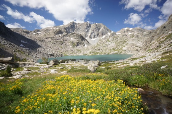 peak lake with yellow wildflowers blue skies
