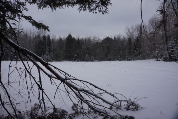 winter hiking in the pigeon river country state forest, michigan