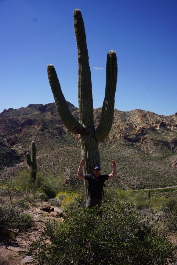 Hiding Behind A Saguaro