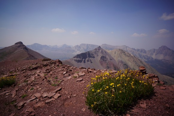 yellow flowers growing on ridgeline in the mountains