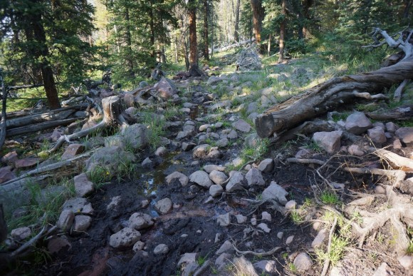 east fork trail horse damage