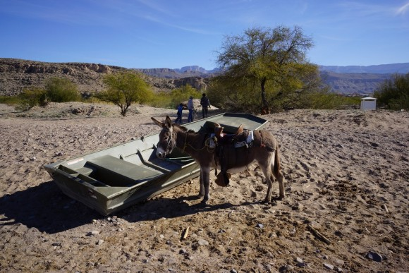 view of a donkey next to a row boat upon entering boquillas, mexico