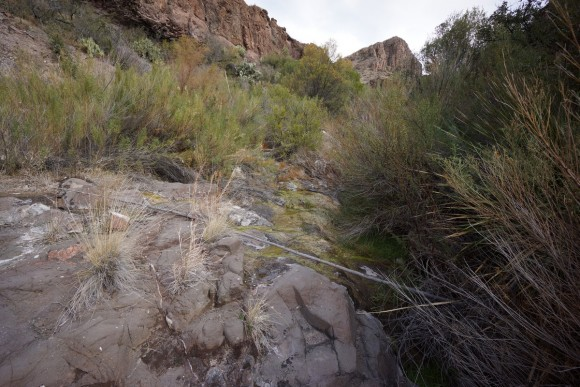 a desert spring in big bend east of goat mountain