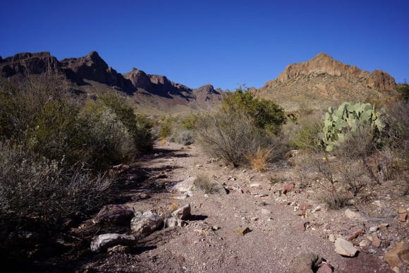 near dominguez spring in big bend