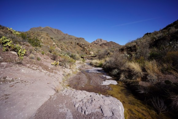 water flowing from dominguez spring in big bend