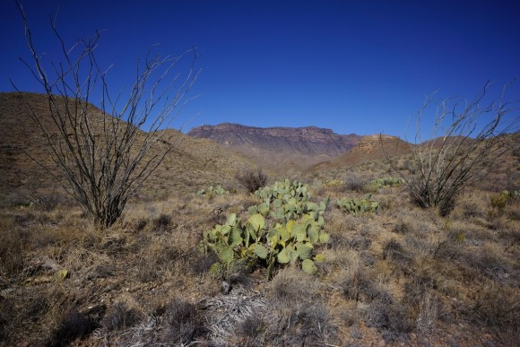 view of south rim in big bend nation park from the elephant tusk trail
