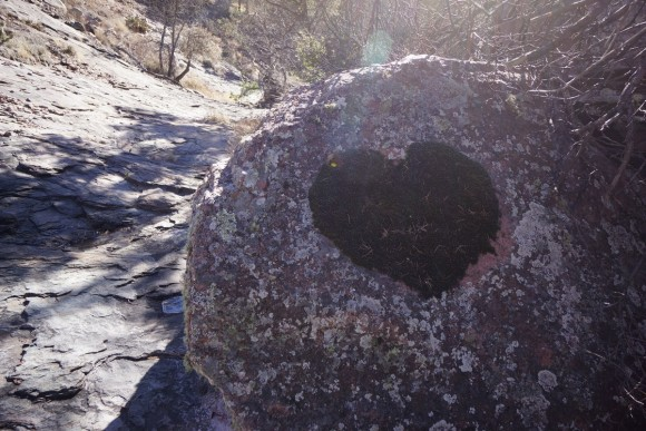 moss growing in the shape of a heart on a rock in the wilderness