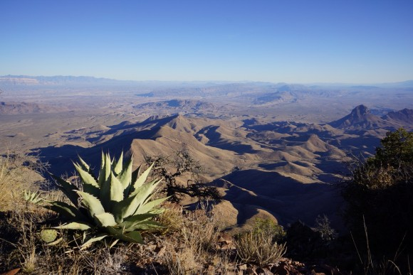 big bend national park agave on south rim