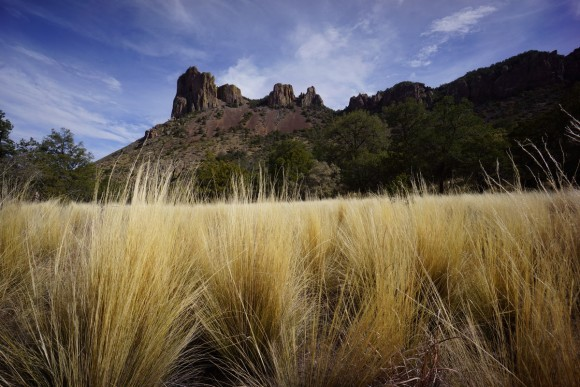 casa grande with golden grass in foreground in the chisos basin